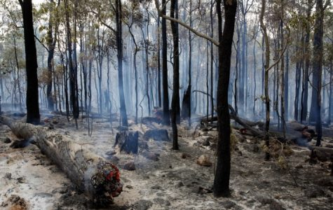 An example of the destruction accompanied by the bushfires in Australia.