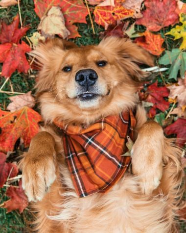 Furry friends love fall weather just as much as their owners do!