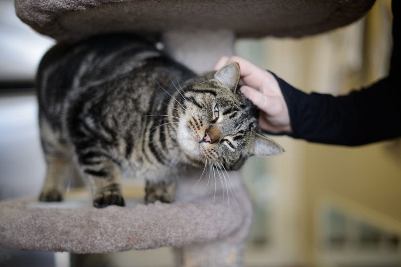 The Purrrfect Companion: Cats are better pets than dogs