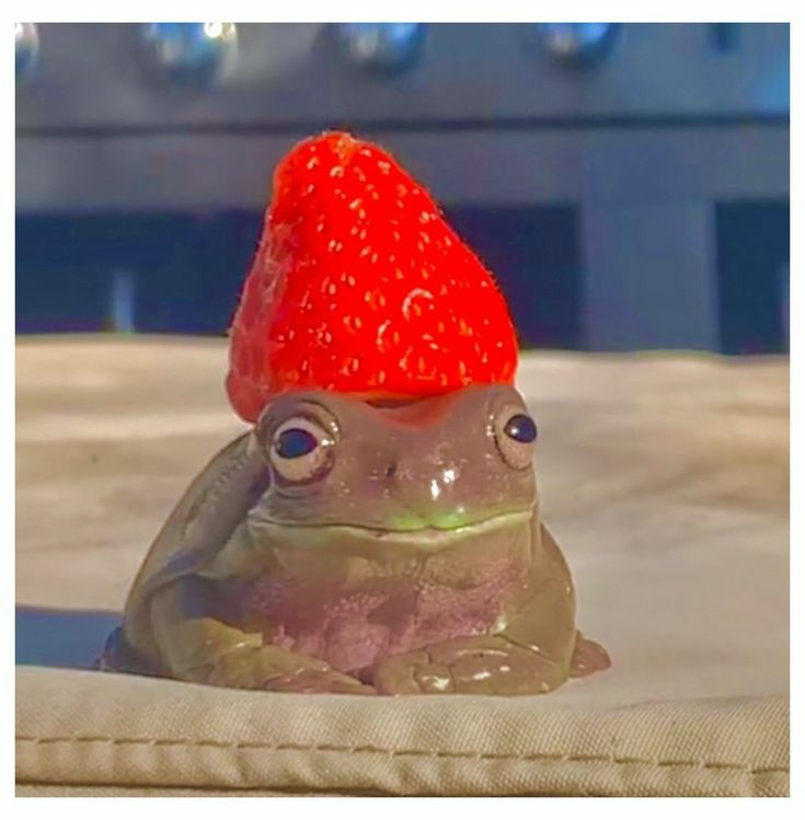 Frogs+make+pretty+fun+pets.+Here%27s+a+list+to+see+which+ones+would+best+suit+you.